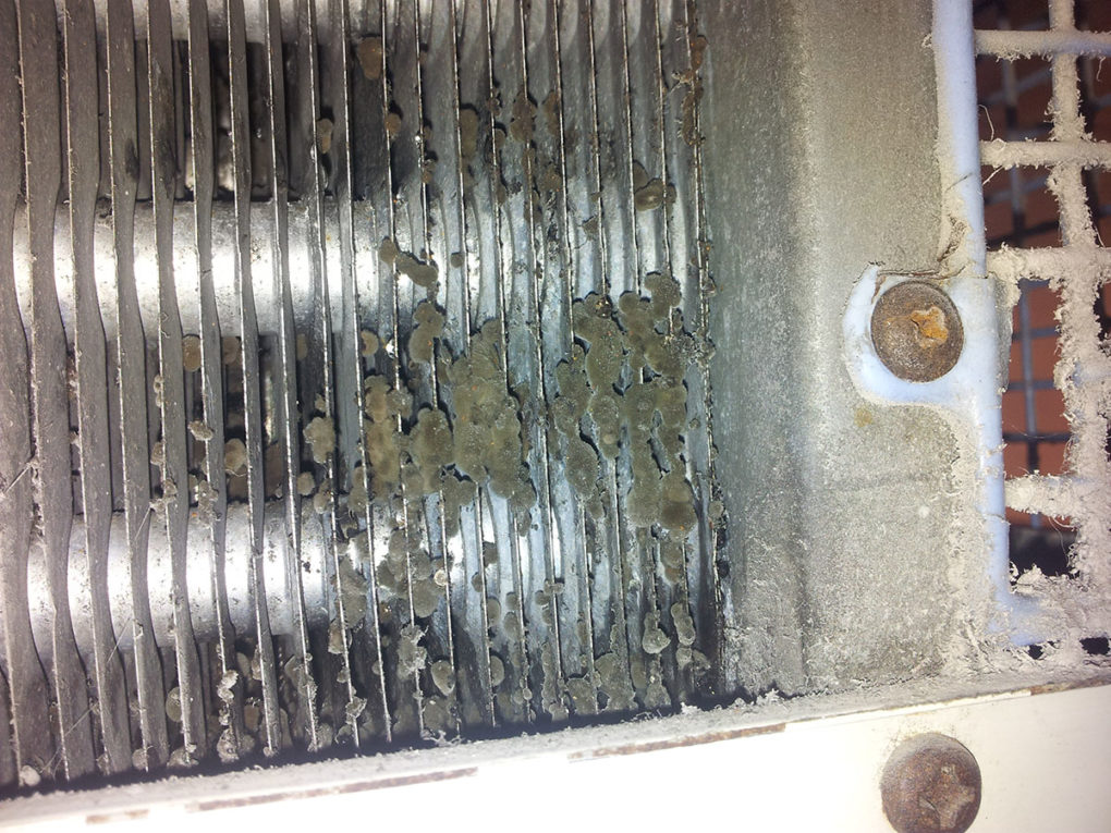 A potentially dangerous build up of bacteria on an air conditioning evaporator coil that had not been professionally maintained.