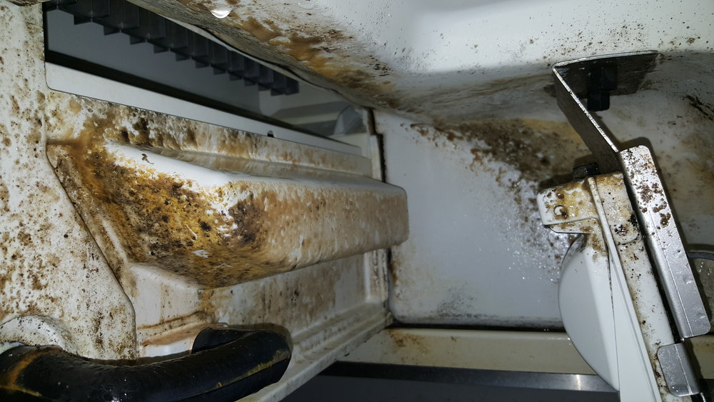 Bacteria growing in a dirty ice machine